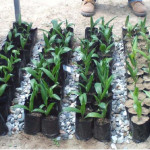 Plantings in soil amended with compost!