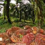 Composting palm fruit bundles