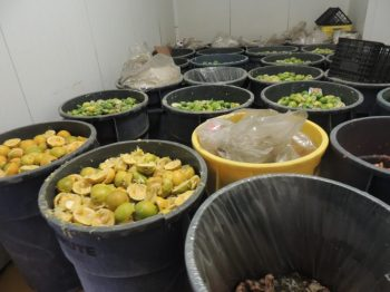 buckets-of-food-waste